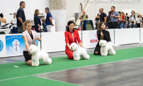 International Dog Show in Ukraine 2019