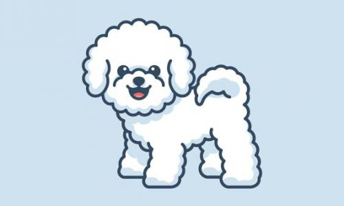 TOP Breeders Bichon Frise. And where you can buy a puppy