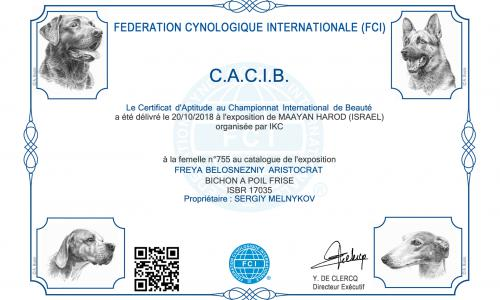Results of the FCI International CACIB Dog Shows in Israel